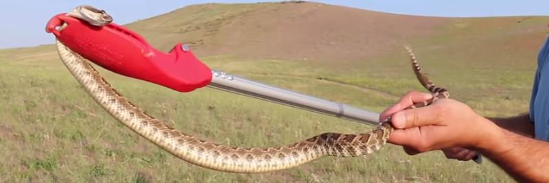 8 Rattlesnake Facts for Kids