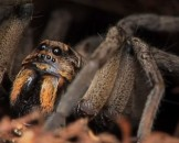 4 Wolf Spider Facts for Kids