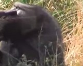 7 Baboon Facts for Kids