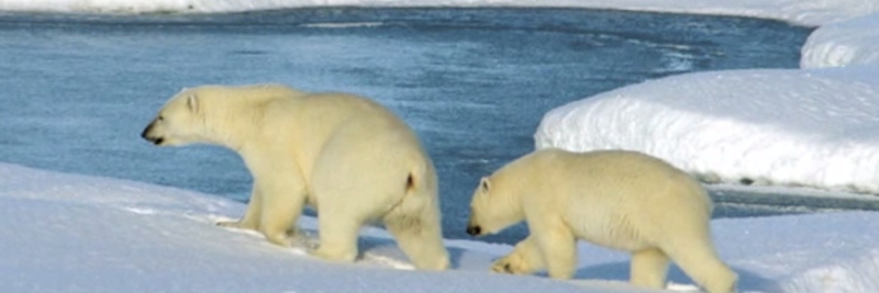 Interesting Arctic Tundra Facts for Kids