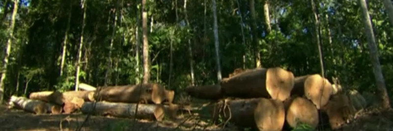 Deforestation pros and cons