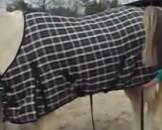 Navajo Horse Blanket