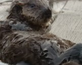 10 Sea Otter Facts For Kids
