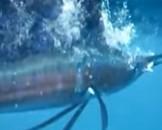 15 Swordfish Facts for Kids