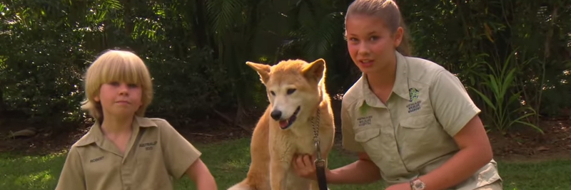 Great Dingo Facts for Kids