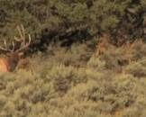 Navajo Hunting